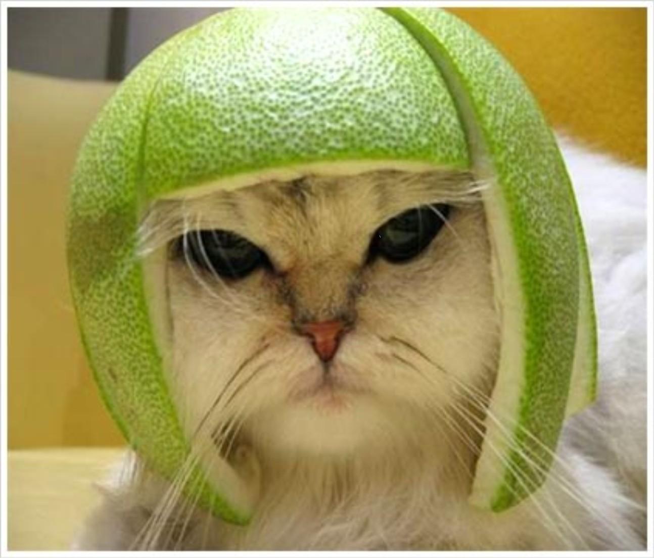 melon-head.jpg